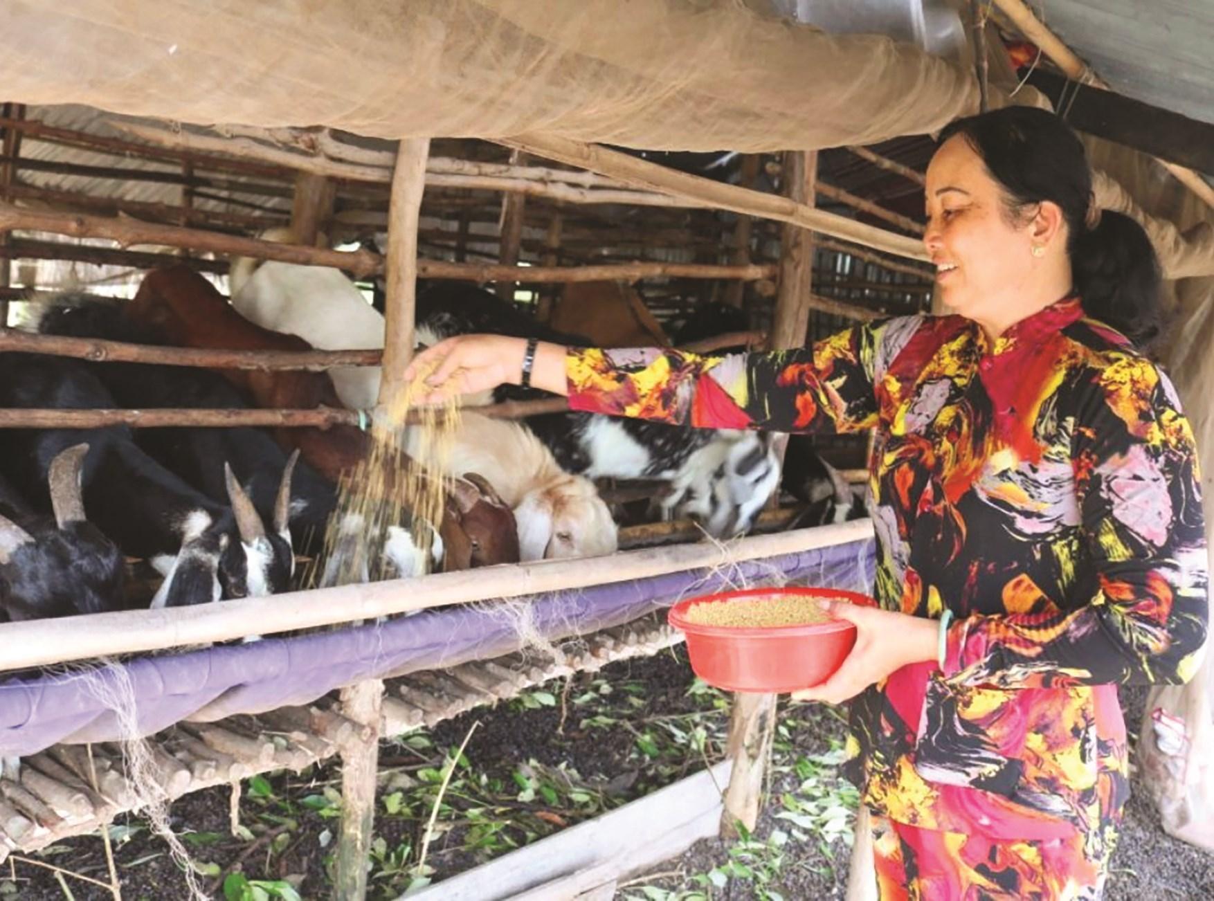 Từ nguồn vốn 30a hỗ trợ, gia đình chị Nguyễn Thị Tuyết ở ấp 8, xã Khánh Tiến đầu tư nuôi dê sinh sản giúp gia đình chị có thu nhập ổn định và thoát nghèo bền vững.