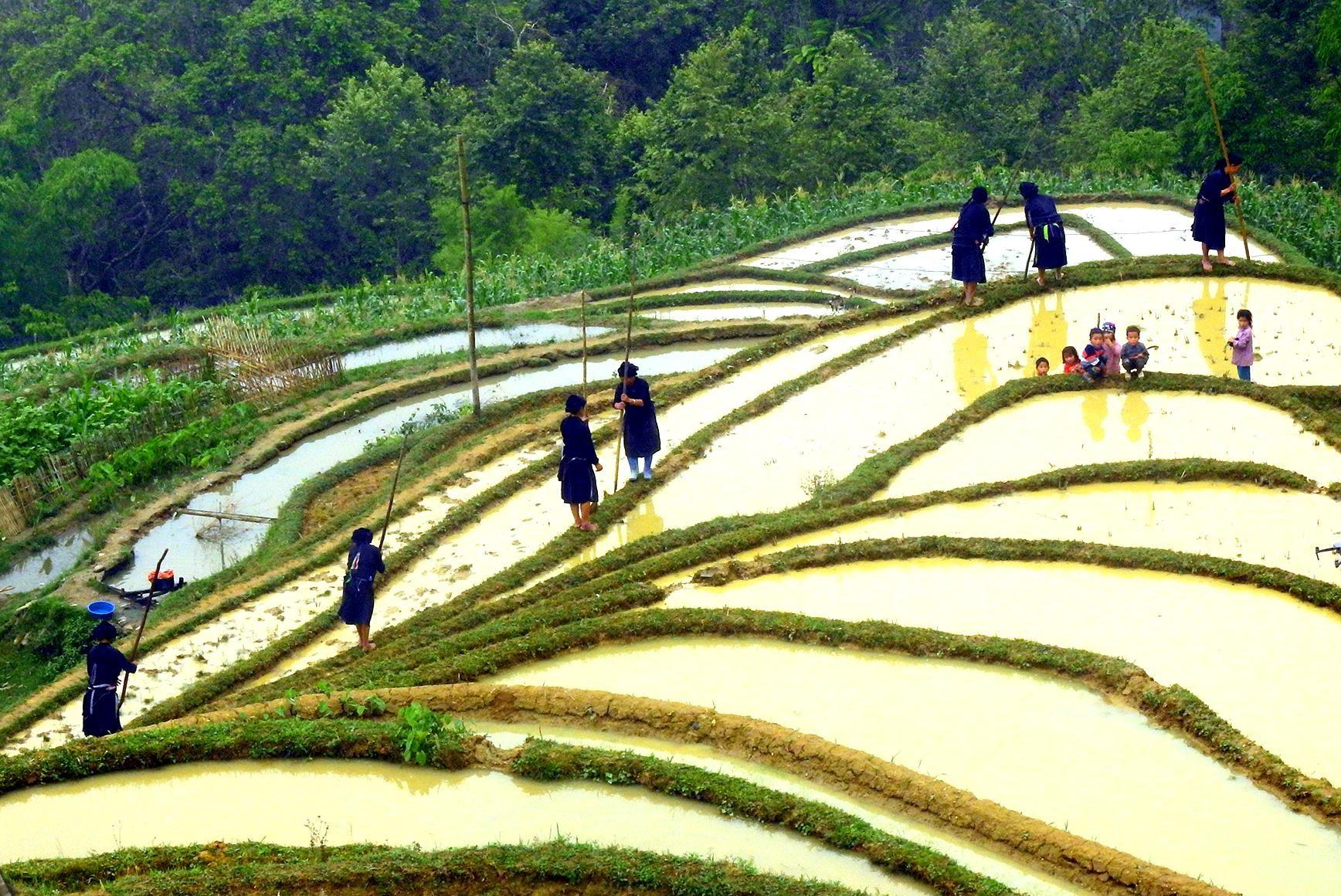 Tác phẩm: Mùa nước đổ , dân tộc La Chí - Bản Phùng (Hoàng Su Phì, Hà Giang). Tác phẩm ghi lại được thời điểm quan trọng nhất trong năm của người dân canh tác ruộng bậc thang.