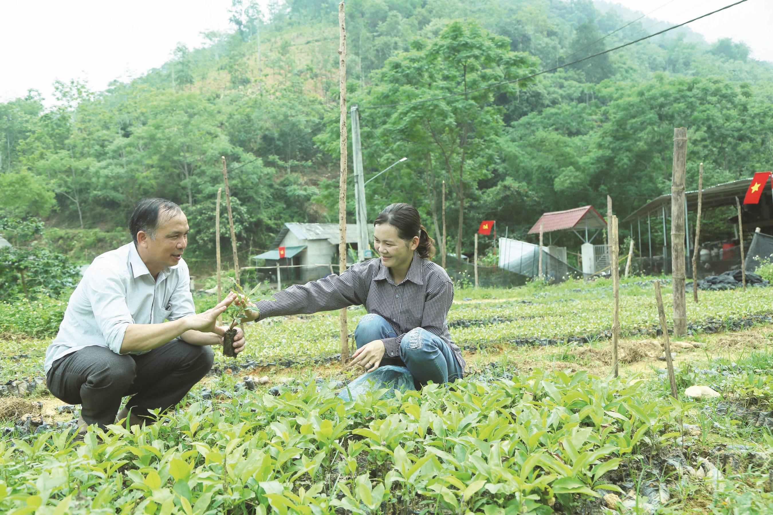 Chị Triệu Thị Thuy giới thiệu cây giống cho khách hàng tại vườn ươm