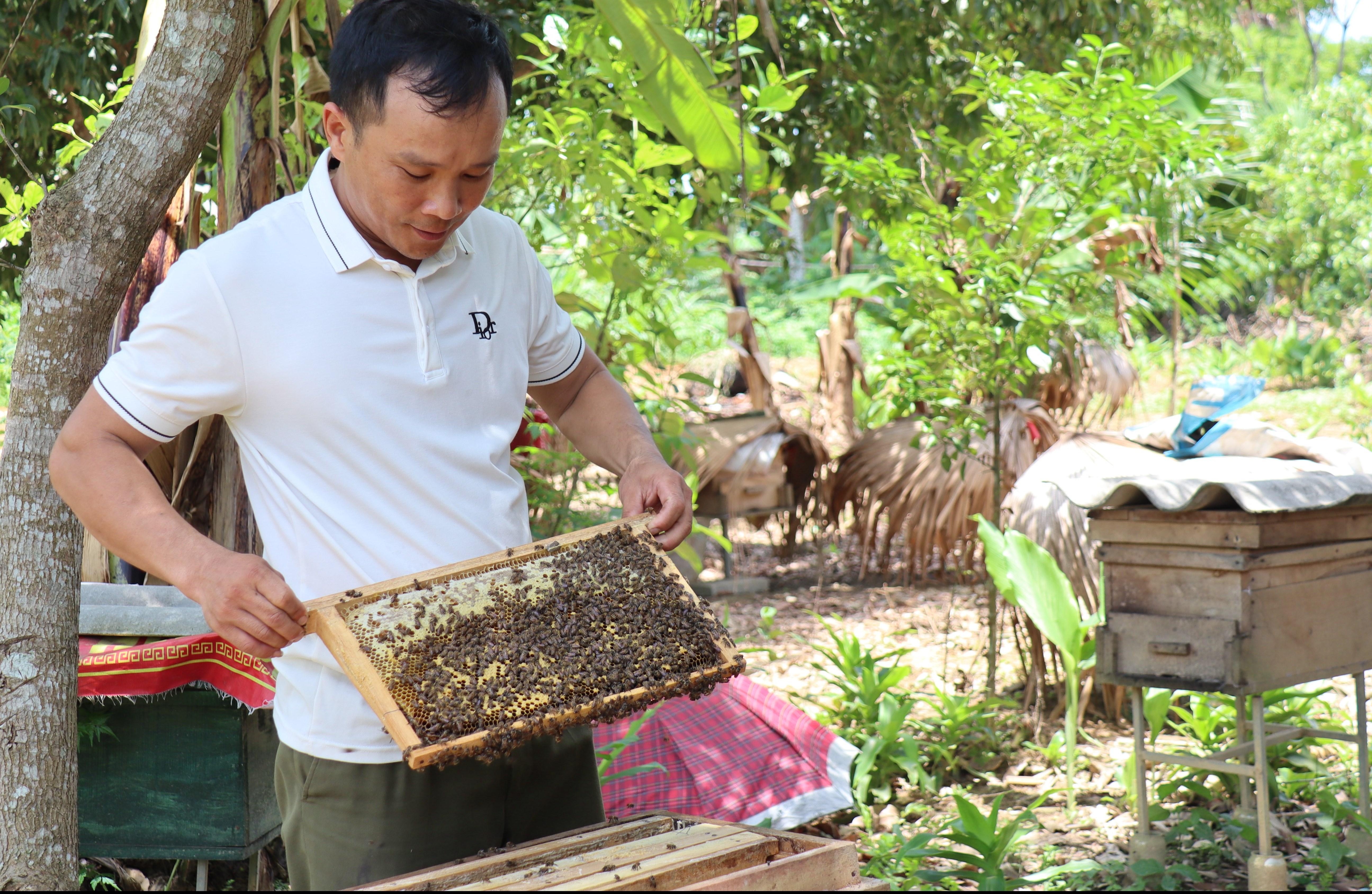 Anh Đinh Nho Tuấn cho biết, mỗi năm anh có thu nhập từ mật ong khoảng 150 triệu đồng.