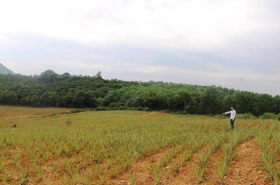 Một khảnh rừng phòng hộ tại khu vực hồ Vực Mấu (Tân Thắng, Quỳnh Lưu, Nghệ An) bị phá và đã được chuyển sang trồng dứa năm 2018