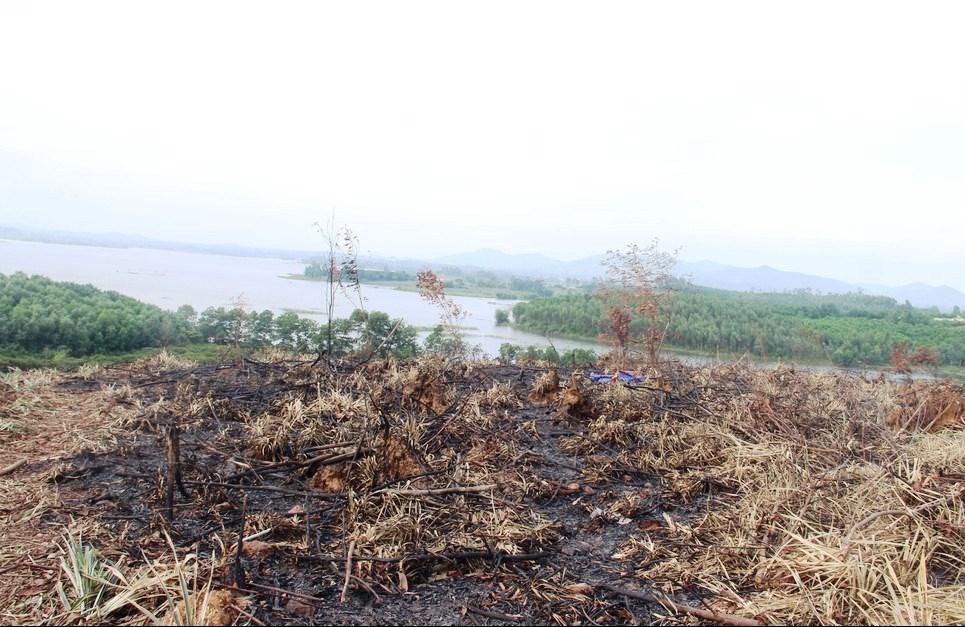 Khu vực rừng phòng hộ ở xã Tân Thắng, huyện Quỳnh Lưu bị chặt phá năm 2018