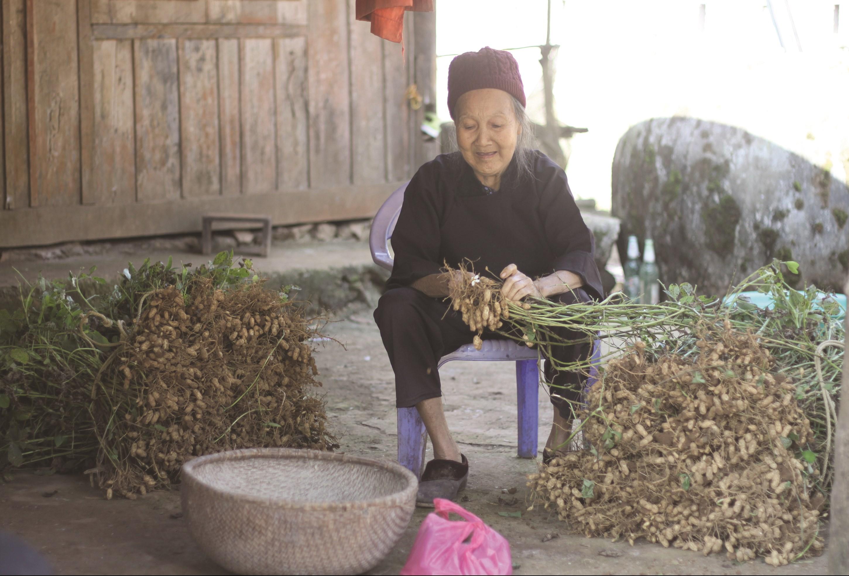 Già Nông Thị Vang phấn khởi trong mùa thu hoạch lạc.
