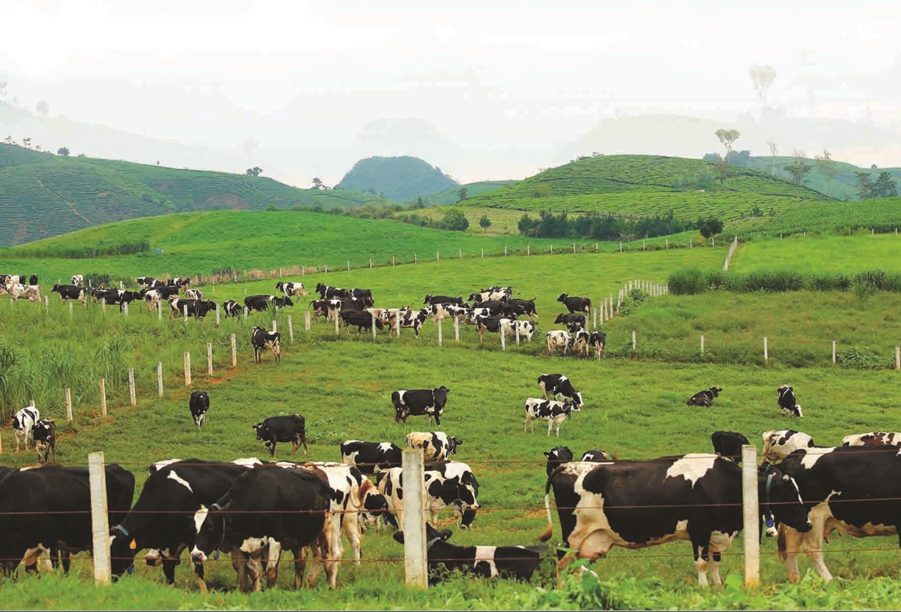Giai đoạn 2008 - 2018, sản lượng sữa tươi nguyên liệu đạt 960 nghìn tấn, tương đương trị giá trên 12 nghìn tỷ đồng