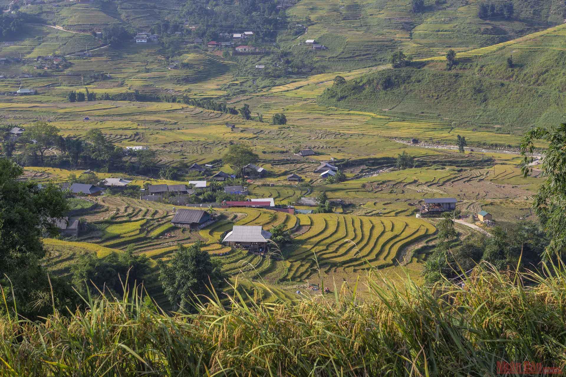 Người dân sẽ cắt lúa vào buổi sáng khi trời còn mát mẻ, buổi chiều họ sẽ đốt rơm để giải phóng đồng ruộng cho mùa vụ năm sau.