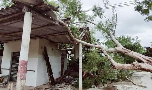 Cây lớn bị quật đổ nằm la liệt tại xã Cự Nẫm, huyện Bố Trạch, Quảng Bình