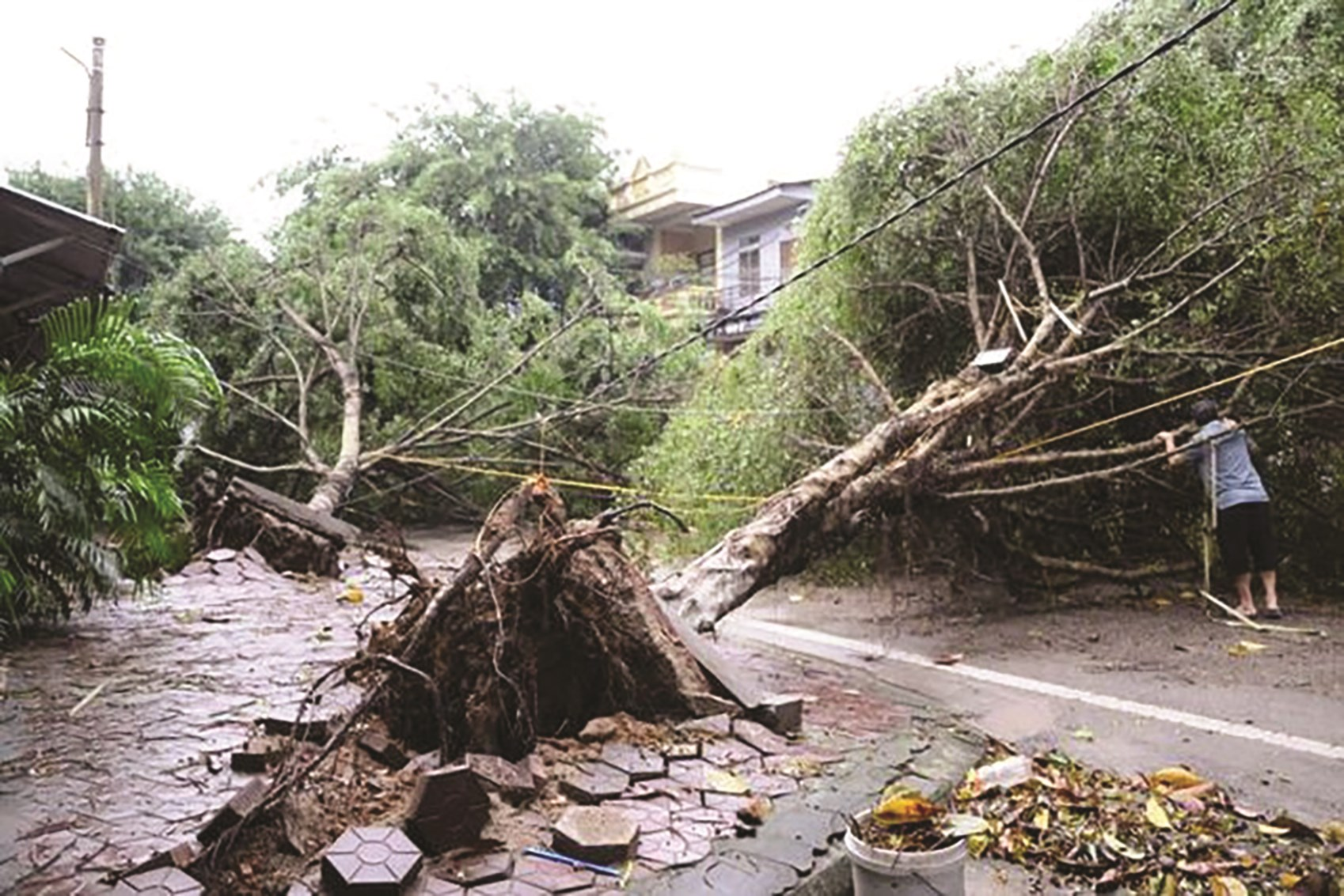 Lốc xoáy làm hàng chục cây si lớn ở gần khu vực Đền Thượng, TP. Lào Cai gãy đổ tối 22/4/2020