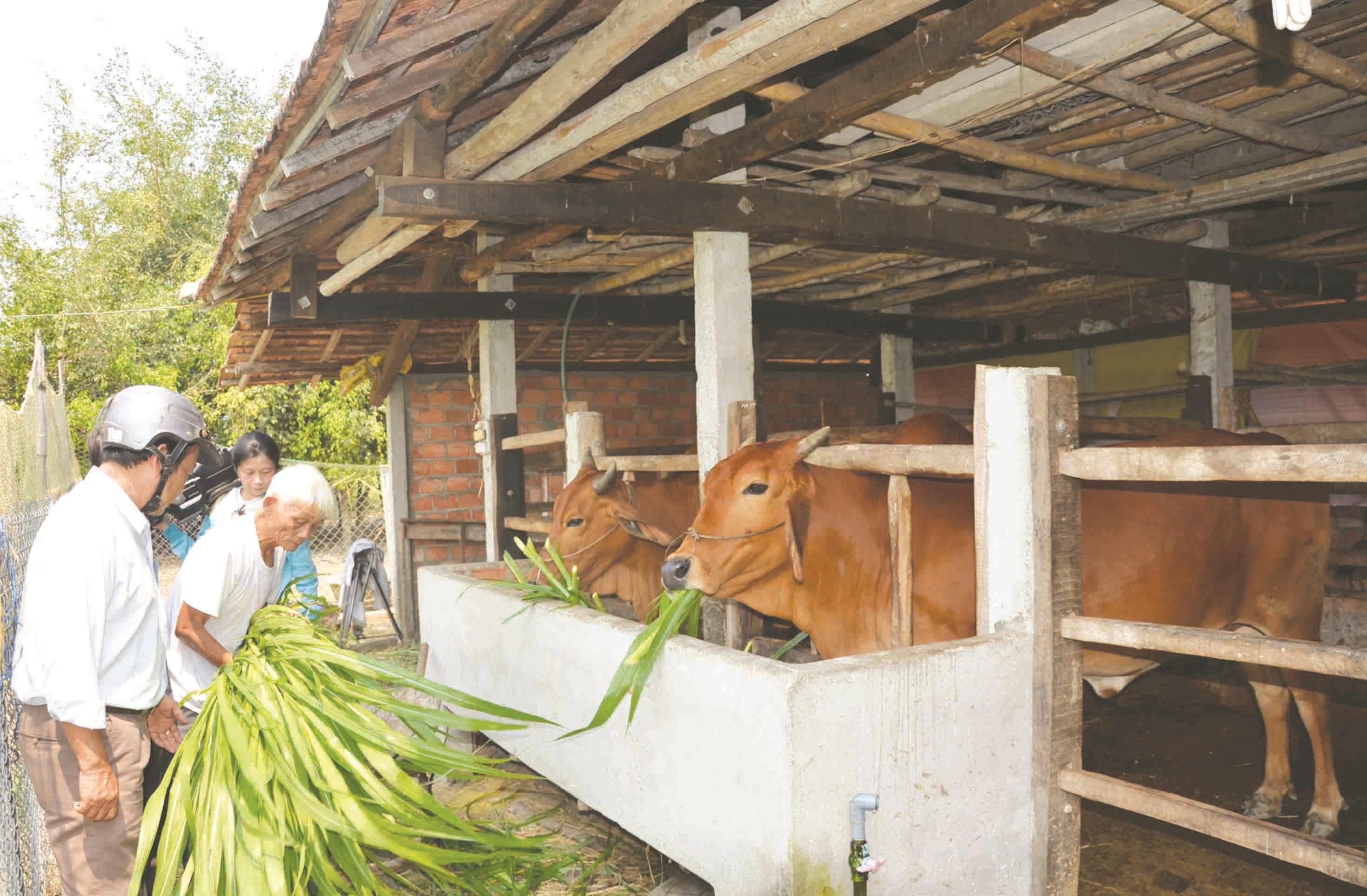 Sự đồng hành của cán bộ trẻ giúp người dân miền núi Quảng Ngãi phát triển kinh tế. (Ảnh minh họa)