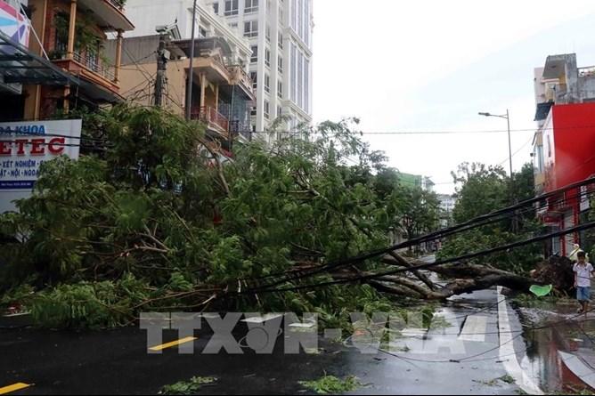 Bão số 5 đổ bộ làm gãy nhiều cây xanh, cột điện, gây ách tắc giao thông tại Thành phố Huế (Ảnh: TTXVN)