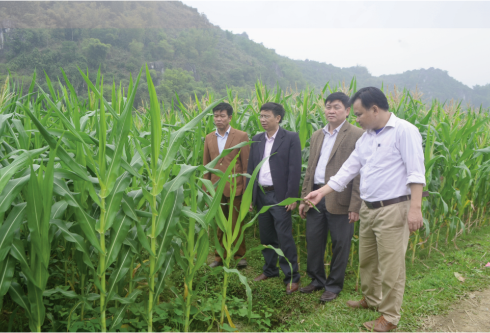 Các mô hình hỗ trợ sản xuất tại huyện Bá Thước đã phát huy hiệu quả cao