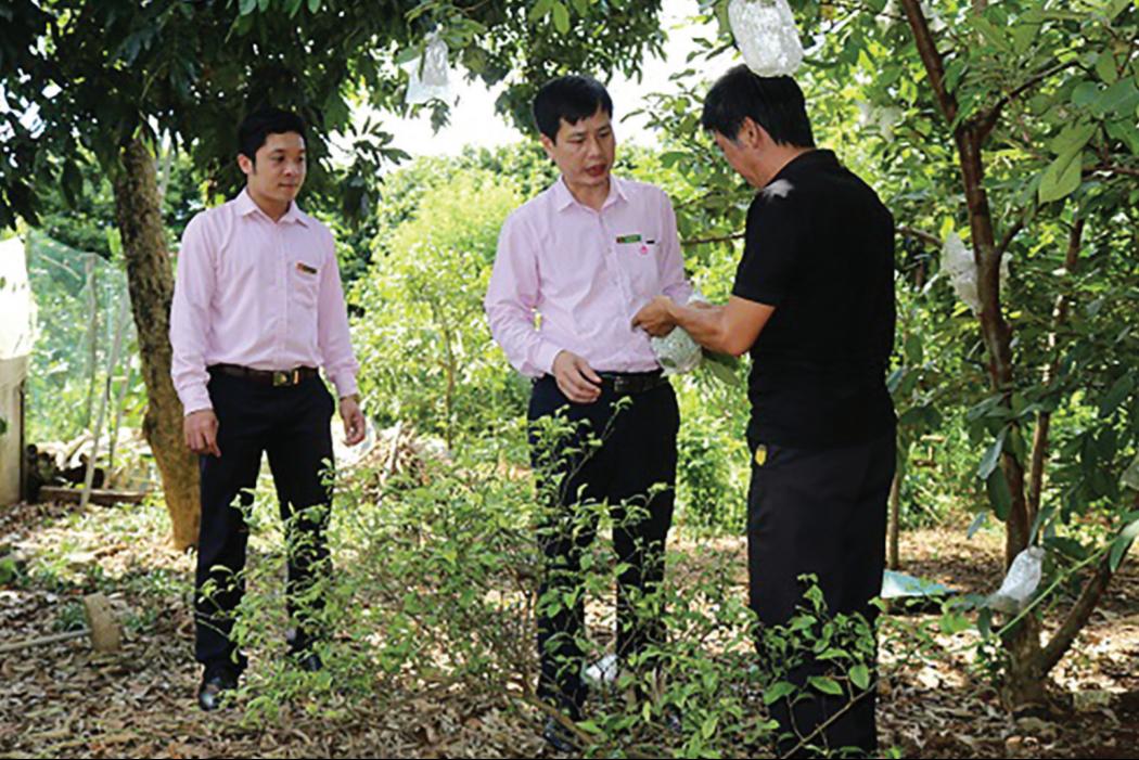 Ông Phạm Văn Hòa (ngoài cùng bên phải) trao đổi với cán bộ NHCSXH