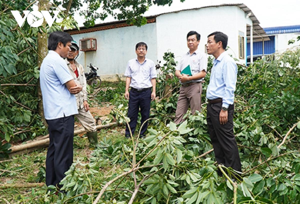 Ông Nguyễn Văn Phương, Phó Chủ tịch UBND tỉnh Thừa Thiên Huế kiểm tra cao su gãy đổ tại xã Phong Mỹ.