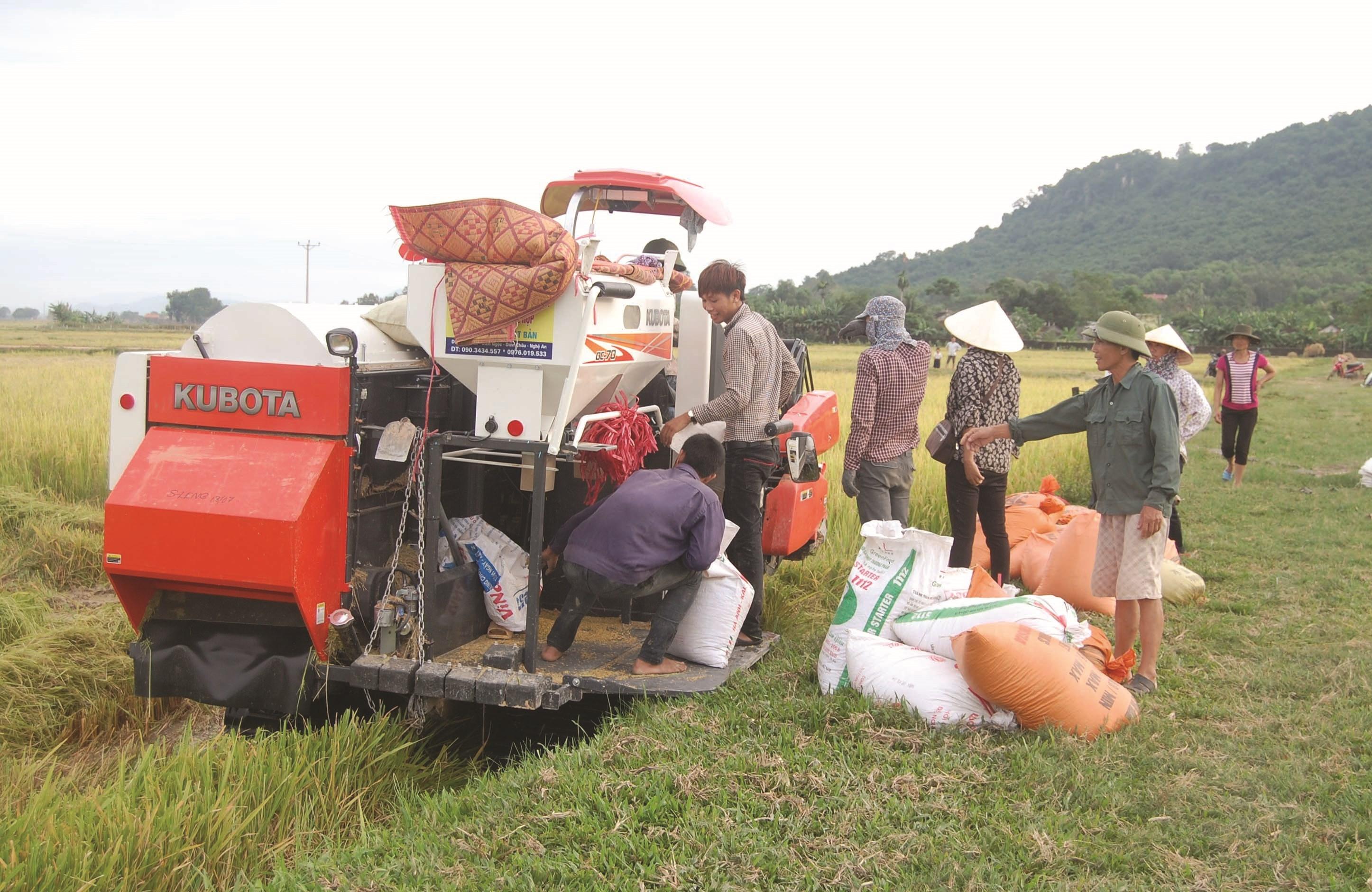 Máy gặt liên hoàn trên cánh đồng huyện Yên Thành