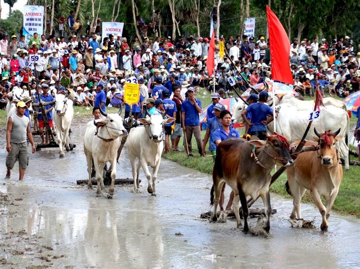 Đua bò là ngày hội lớn của đồng bào Khmer vùng Bảy Núi An Giang (nhân dịp lễ Sen Đôn ta) thu hút sự quan tâm của đông đảo người dân và du khách đến theo dõi, cổ vũ.