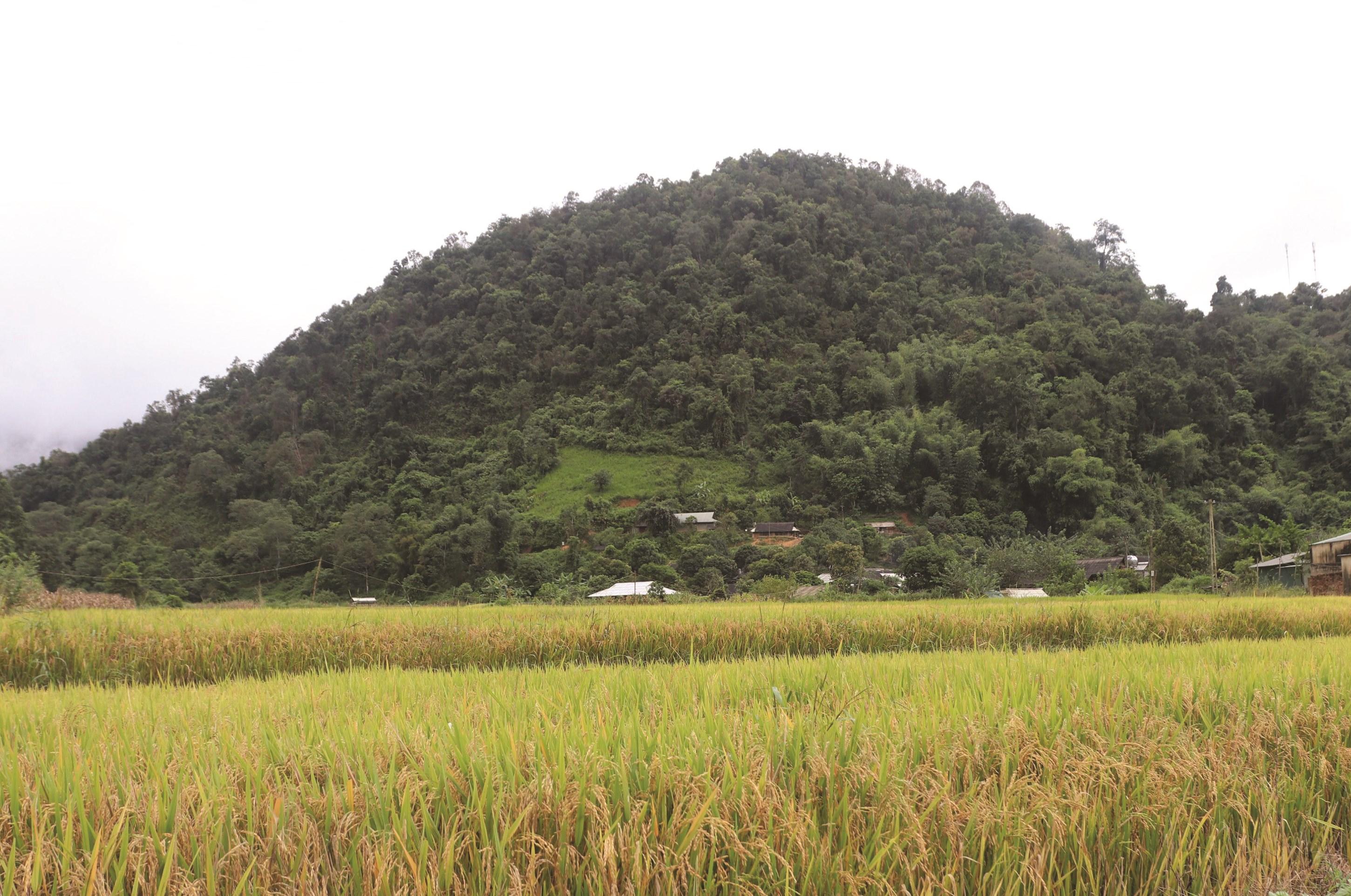 Những đồng lúa trĩu hạt giúp người dân Na Ư có đầy đủ lương thực, ổn định cuộc sống