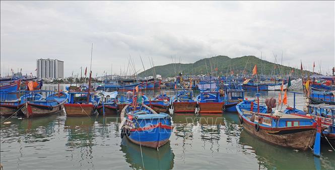 Khu neo đậu tránh trú bão tại cảng cá Hòn Rớ (xã phước Đồng, thành phố Nha Trang, Khánh Hòa) có quy mô chứa khoảng 1.500 tàu.