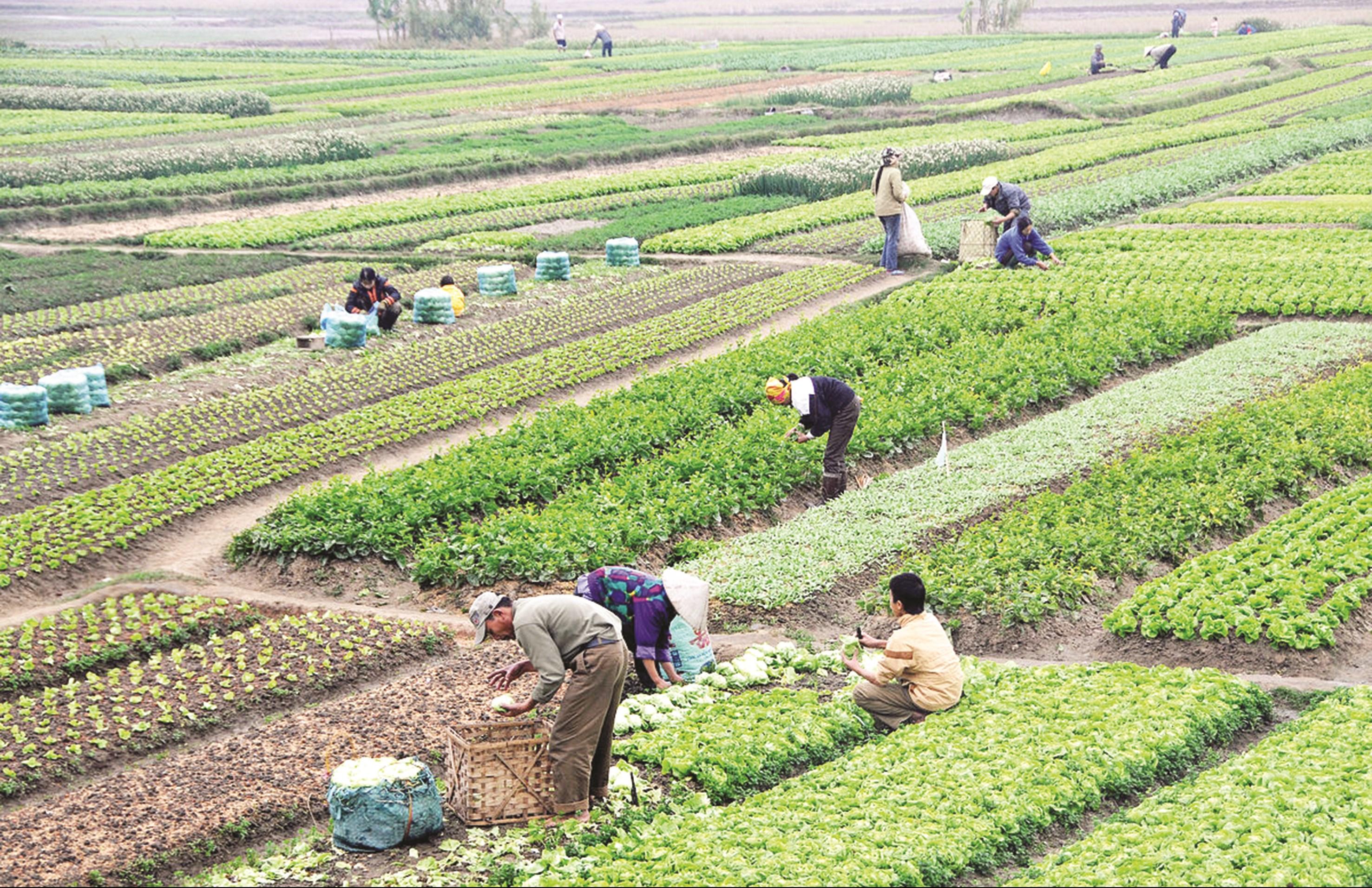 Ngành Nông nghiệp Việt Nam đang tạo ra một lượng hàng hóa lớn, nhưng đầu ra cho sản phẩm vẫn còn nhiều khó khăn.