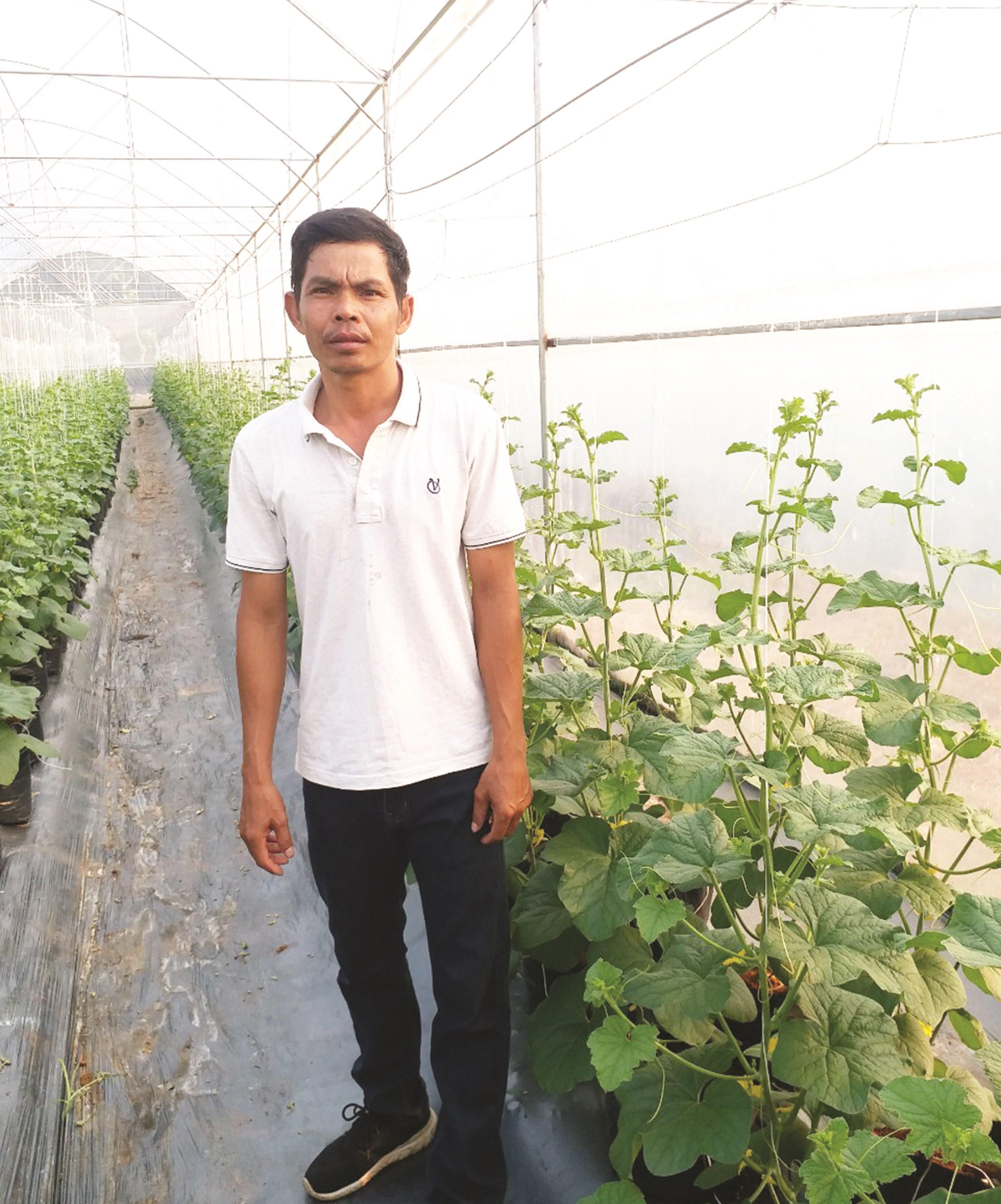 Anh Lâm Bao trong vườn trồng dưa lưới