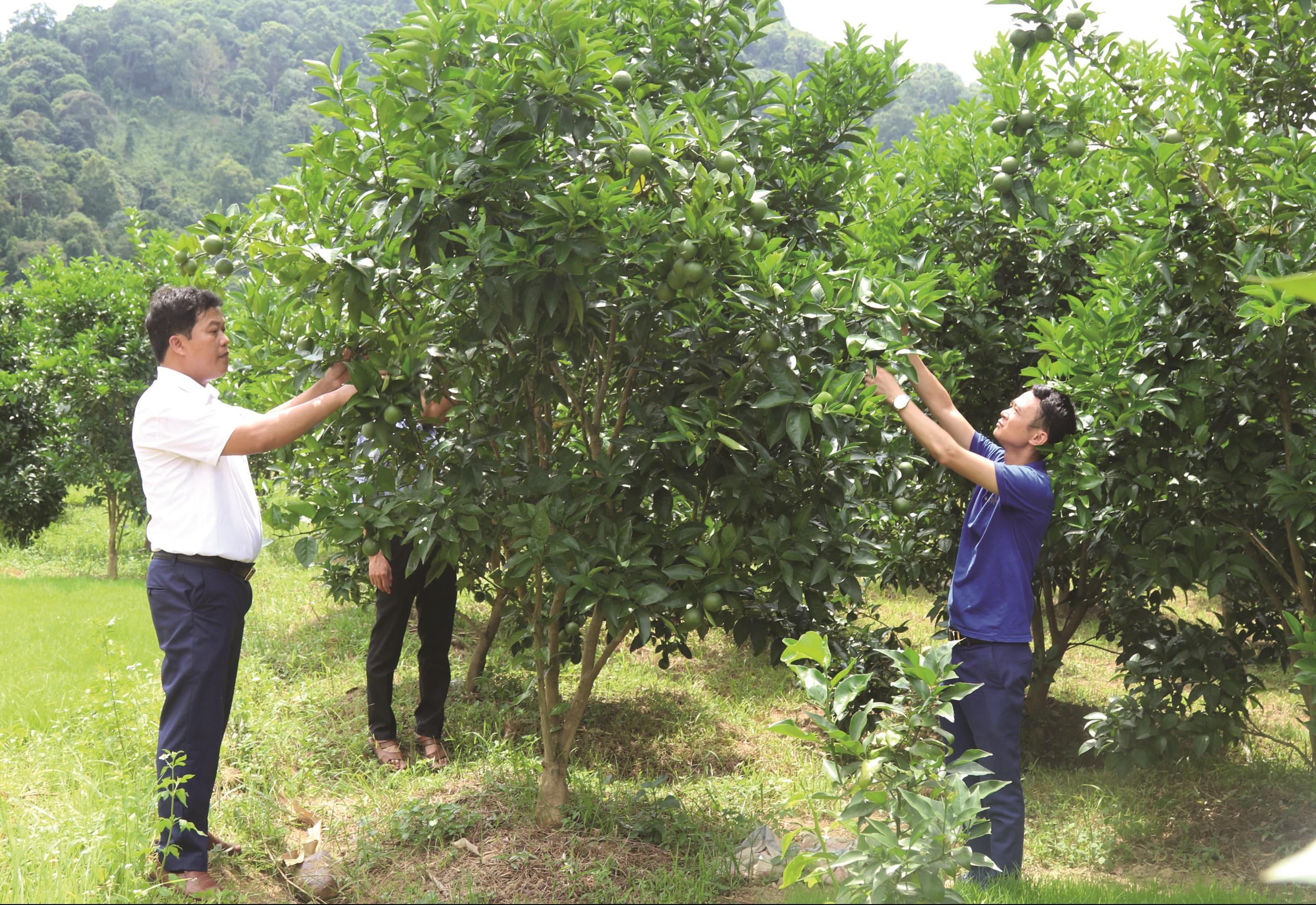 Nông sản Việt phải đáp ứng các điều kiện đủ mới có thể tận dụng được hiệu quả mà hiệp định EVFTA mang lại.