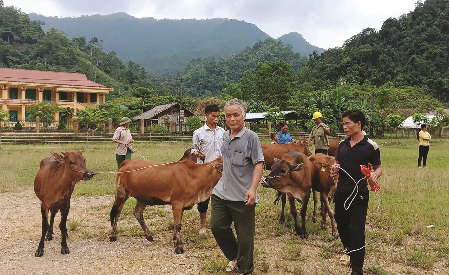Chương trình vay bò trả bê ở xã Phúc Yên, huyện Lâm Bình (Tuyên Quang) góp phần giảm nghèo bền vững cho các hộ nghèo trên địa bàn.
