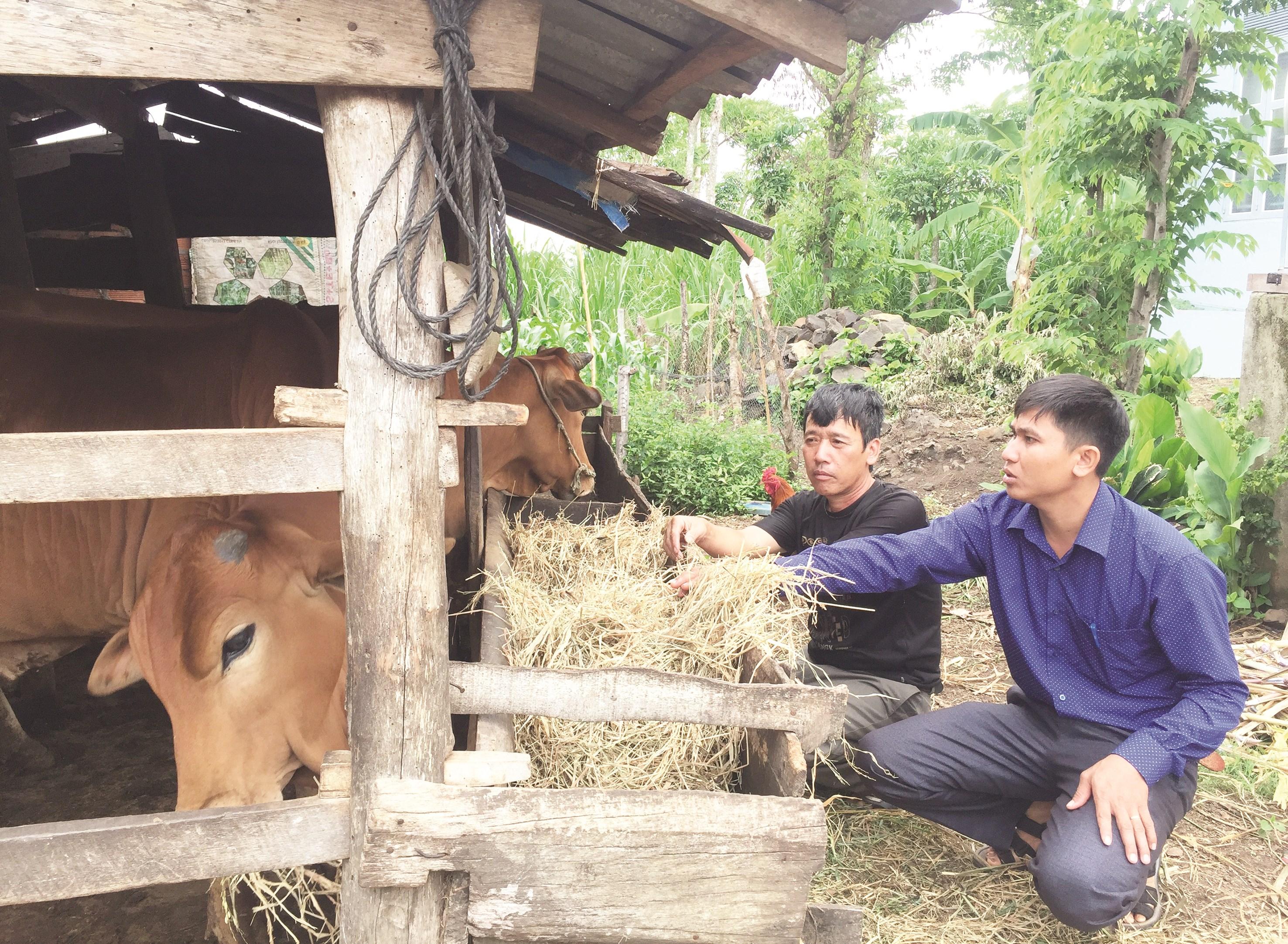 Ông Ma Văn Toàn (trái) đang giới thiệu cho cán bộ xã về mô hình chăn nuôi bò của gia đình. Ảnh T.Dũng