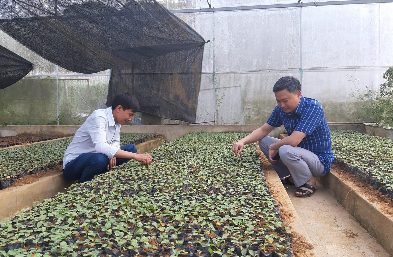 Anh Phan Xuân Diện kiểm tra nhà ươm cây dược liệu