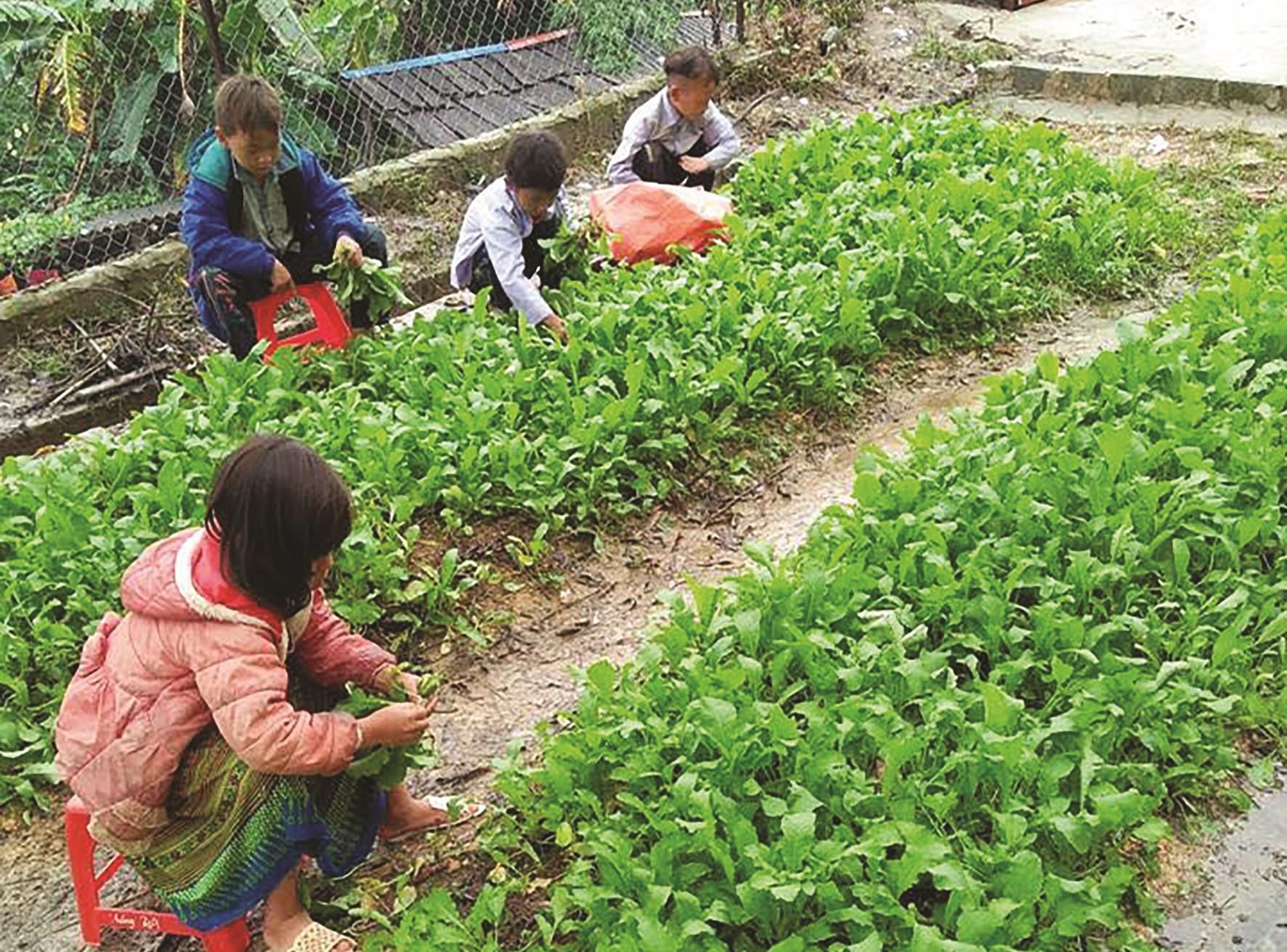 Các em học sinh Trường PTDTBT Tiểu học Sơn Lương chăm sóc vườn rau tại trường