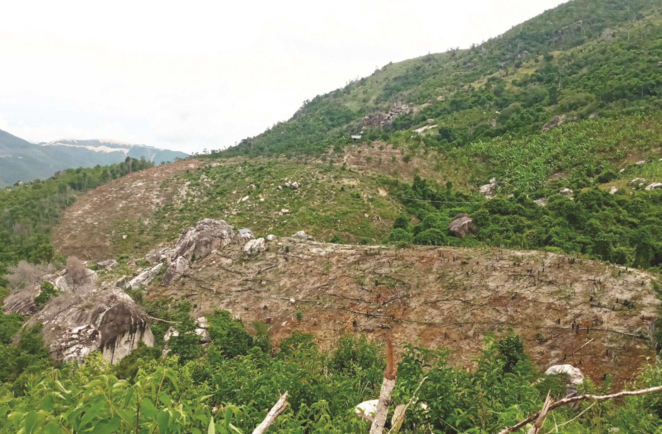 Khu đất này trước đây là rừng, giờ đã bị phá trơ trọi ở Cam Lâm, Khánh Hòa