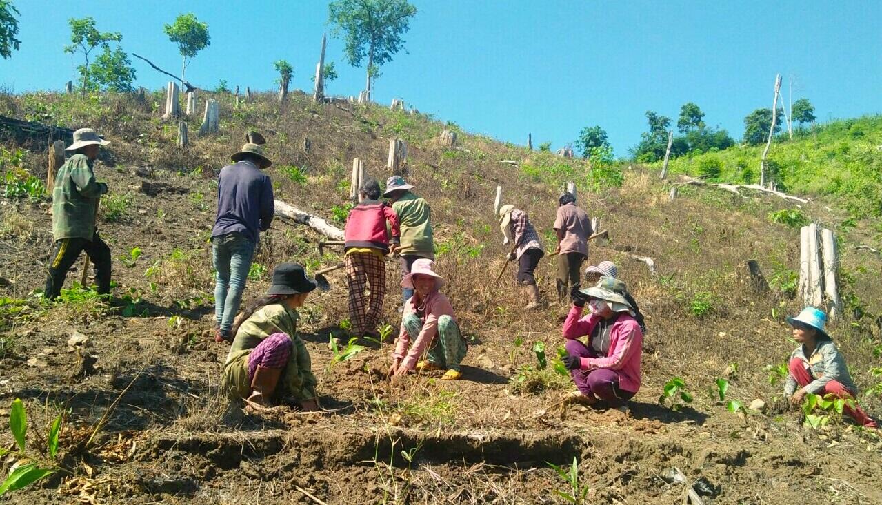 Các huyện miền núi tỉnh Khánh Hòa đang bước vào mùa trồng rừng