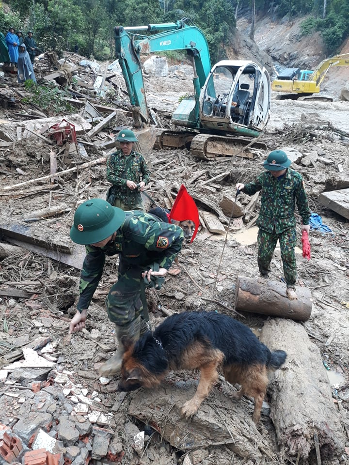 Chó nghiệp vụ tham gia tìm kiếm cứu nạn