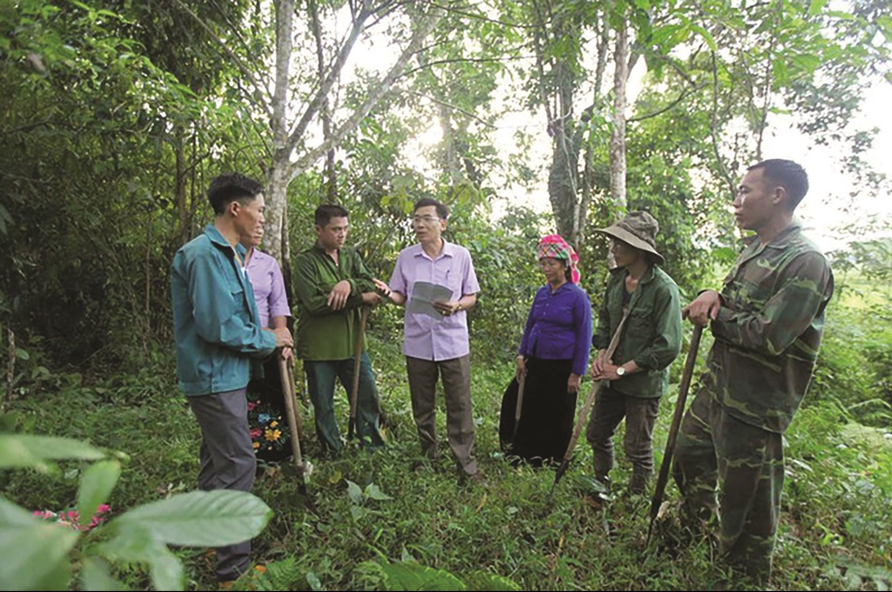 Thỏa thuận ERPA sẽ bổ sung nguồn lực kịp thời cho công tác bảo vệ, phát triển, nâng cao chất lượng rừng của 6 tỉnh Bắc Trung Bộ. (Ảnh minh họa)