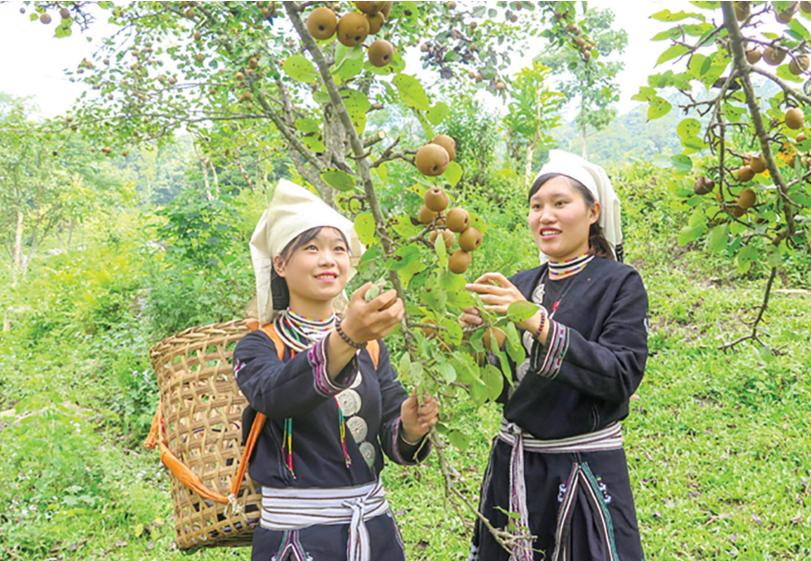 Phụ nữ thôn Khau Tràng, xã Hồng Thái, huyện Na Hang (Tuyên Quang) tích cực chuyển đổi cơ cấu cây trồng, tập trung phát triển kinh tế