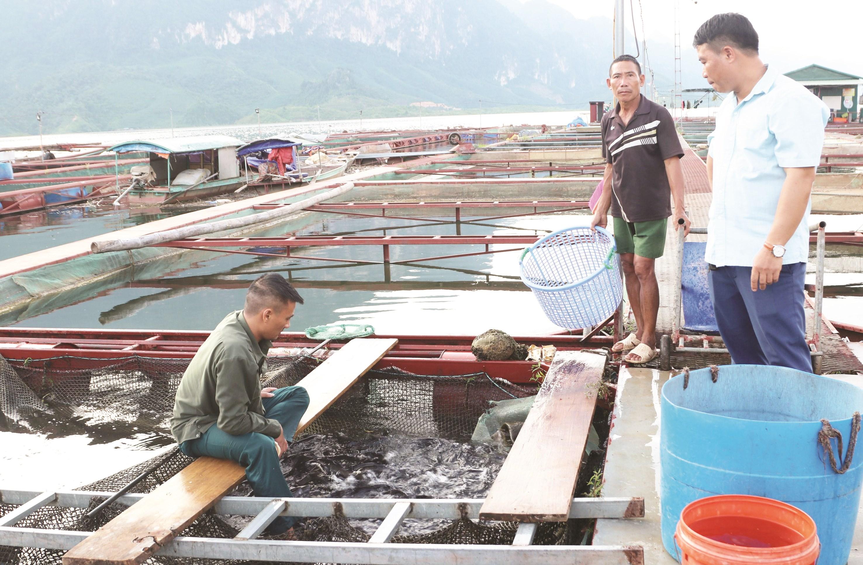 Mô hình nuôi cá lồng của HTX Hợp Lực ở xã Chiềng Ơn mang lại hiệu quả kinh tế cao.