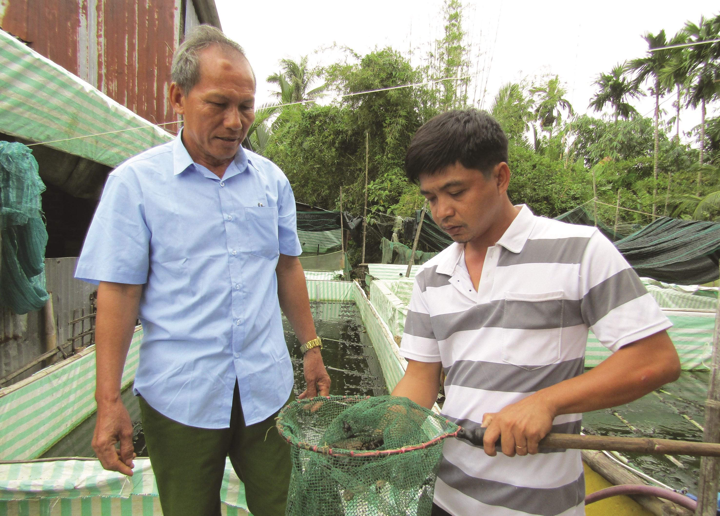 Ông Thảo thăm mô hình nuôi ếch của một hộ dân.