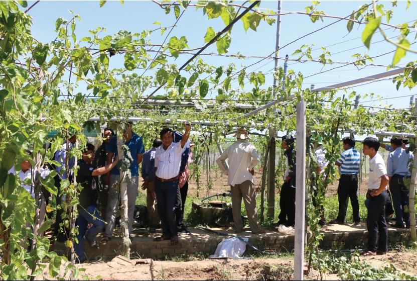 Nhiều lao động nông thôn Quảng Ngãi sau khi học nghề nông nghiệp đã áp dụng vào sản xuất hiệu quả