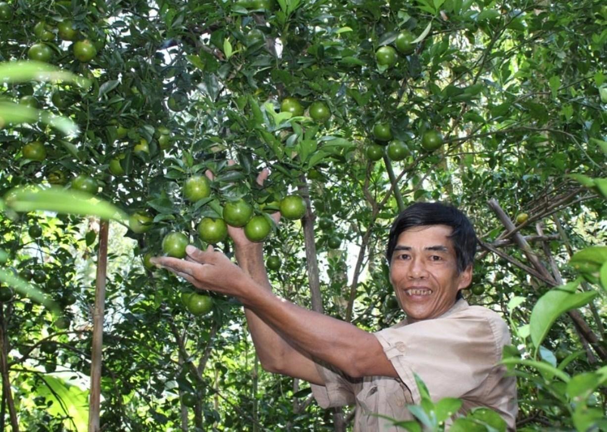 Từ nguồn vốn vay ưu đãi của Ngân hàng Chính sách xã hội, anh Danh Na Rinh ở ấp 1, xã Vĩnh Thuận Tây (huyện Vị Thủy) thực hiện mô hình trồng quýt đường mang về thu nhập cả trăm triệu đồng/năm.