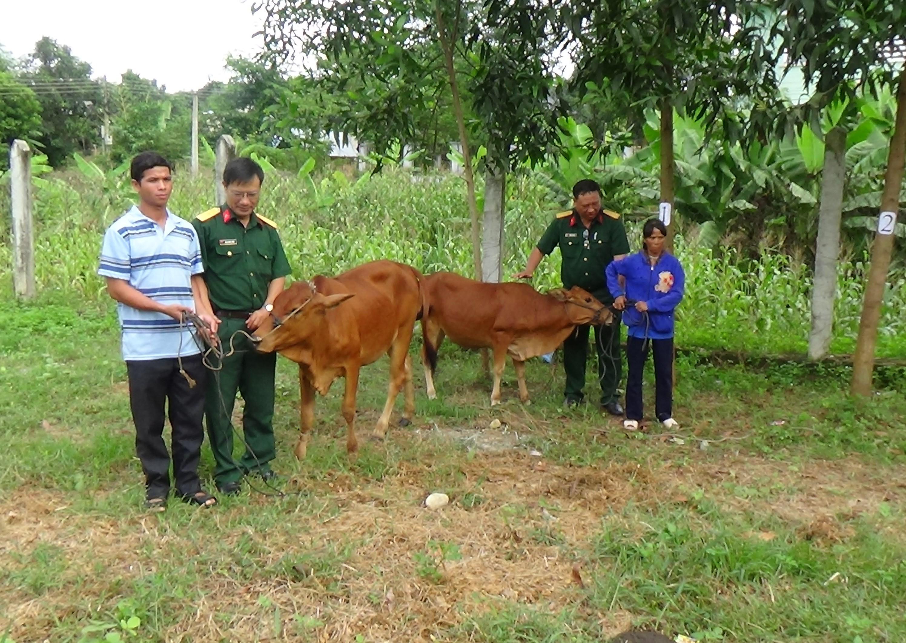 Các Nhóm hỗ trợ tặng bò giống cho người dân xã Khánh Phú.