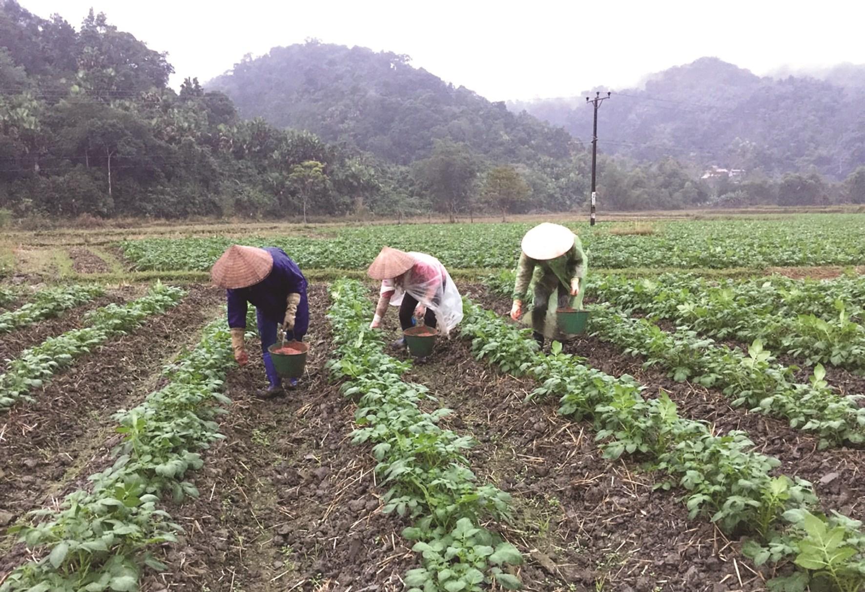 Vùng trồng rau an toàn tại thôn Bó Lách, xã Quyết Tiến.