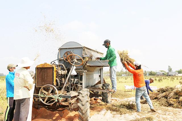 Chiếc máy tuốt hạt vừng của anh Nguyễn Thanh Hùng ngụ ấp 1, xã Thường Phước 2, huyện Hồng Ngự, tỉnh Đồng Tháp.