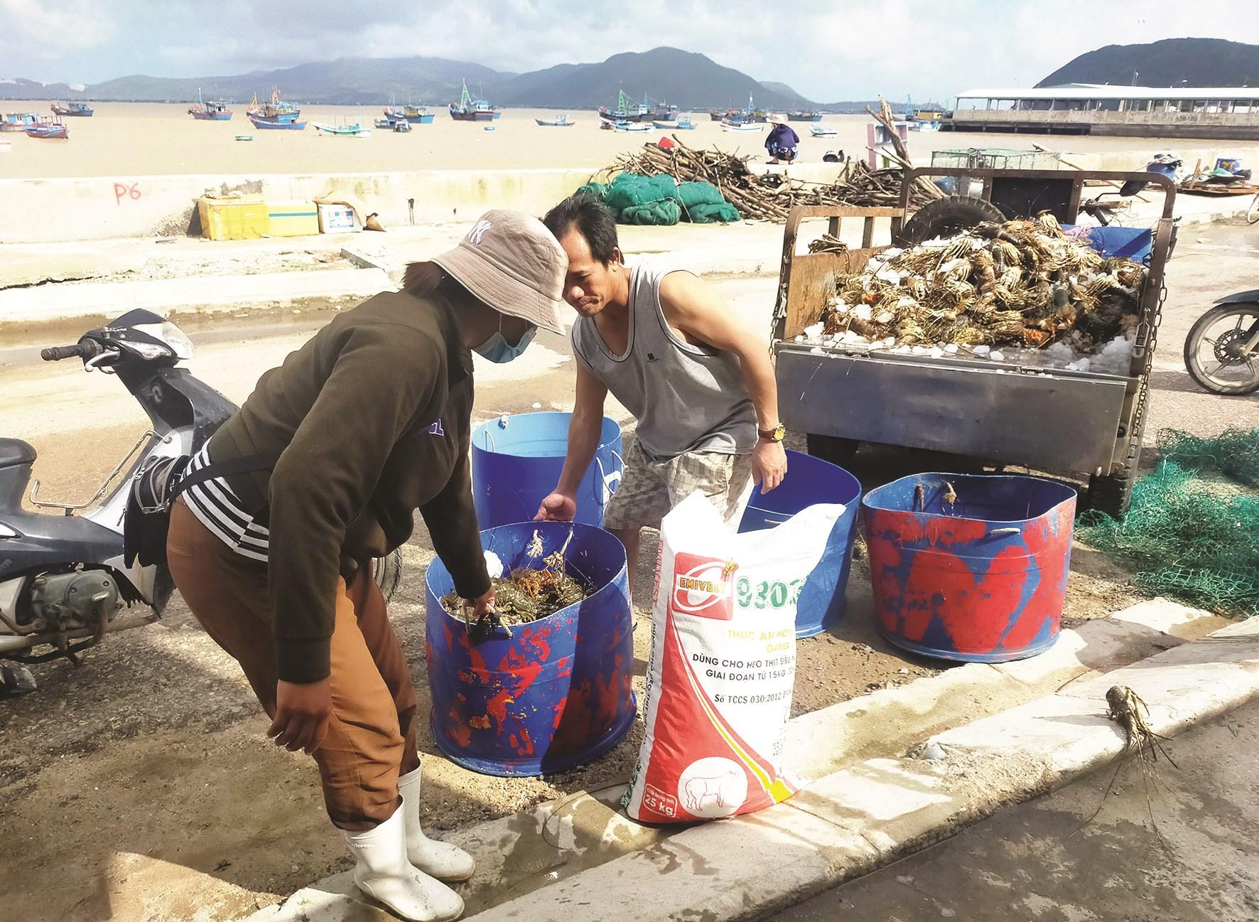 Người nuôi tôm hùm ở Phú Yên bị thiệt hại nặng nề sau lũ lụt