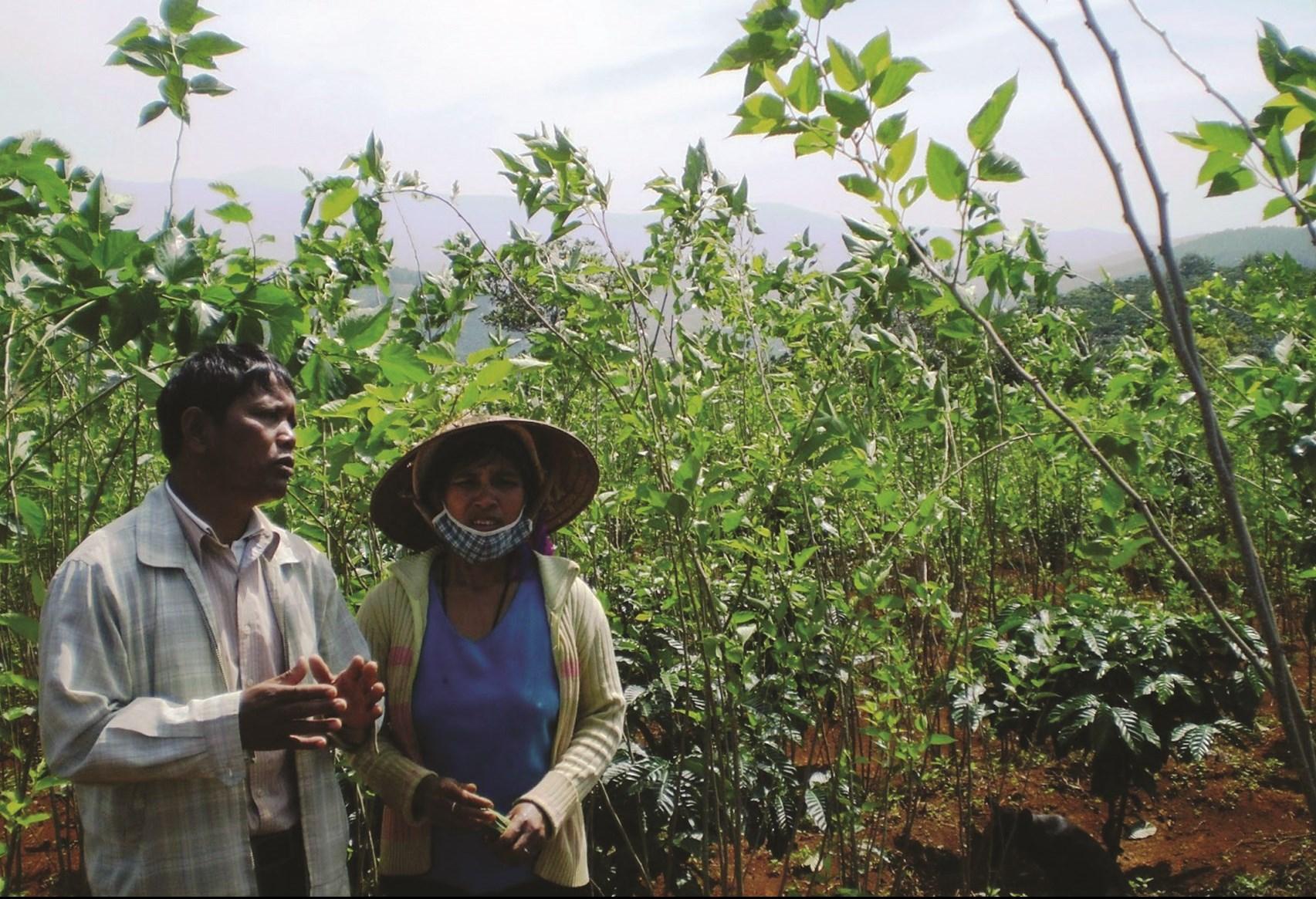 Nhiều hộ đồng bào DTTS ở Đam Rông thoát nghèo nhờ mô hình trồng dâu nuôi tằm