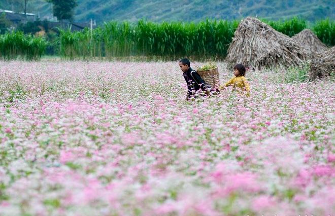 Lễ hội hoa Tam giác mạch tỉnh Hà Giang nhằm quảng bá, tôn vinh giá trị di sản, phát huy tiềm năng, lợi thế về du lịch, cải thiện sinh kế cho đồng bào các dân tộc vùng cao núi đá. Ảnh: Tư liệu