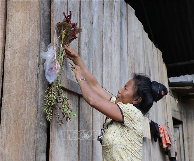 Nghi thức văn hóa cắm hoa mào gà lên đầu hồi nhà sàn trước ngày bản làng tổ chức Tết hoa. Ảnh: Xuân Tiến/TTXVN