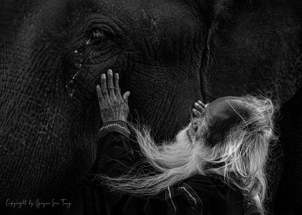 """Tác phẩm """"Nước mắt đại ngàn"""" đạt giải Xuất sắc Cuộc thi Nhiếp ảnh Quốc tế Orhan Holding"""