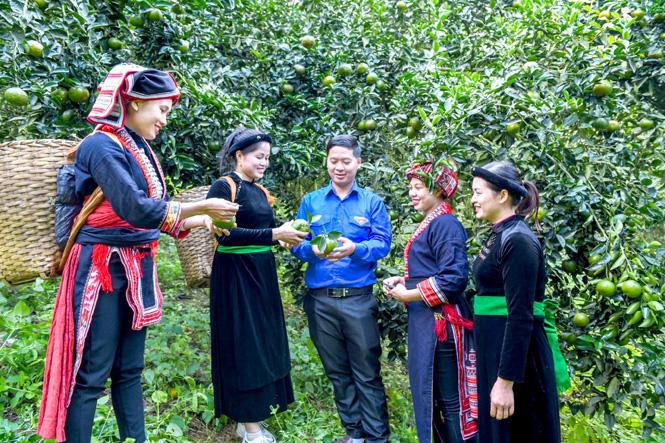 Cam sành Hàm Yên (Tuyên Quang) là sản phẩm OCOP được gắn sao