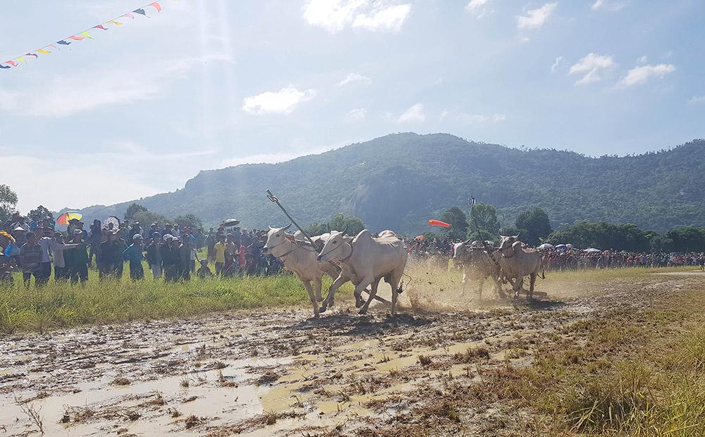Hội đua bò Bảy Núi (Ảnh: BAG)