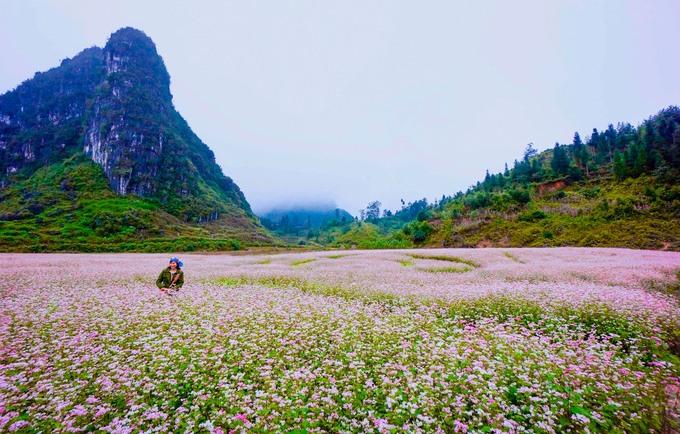 Lung linh sắc màu hoa tam giác mạch trên Cao nguyên đá Đồng Văn (Ảnh TL)