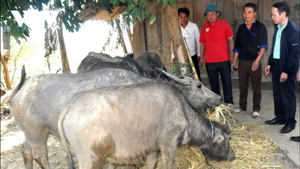 Cơ quan chuyên môn huyện Mù Cang Chải kiểm tra công tác phòng chống dịch lở mồm long móng ở xã Nậm Có.