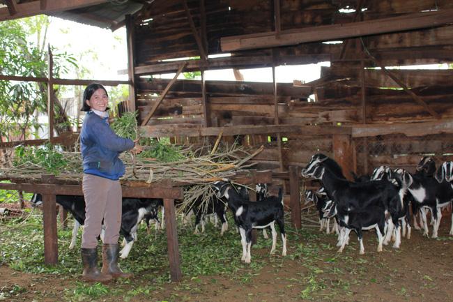Tận dụng tốt lợi thế về kinh nghiệm và điều kiện của gia đình, chị Lữ Thị Kim Xuyến đã thoát nghèo nhờ chăn nuôi dê hiệu quả