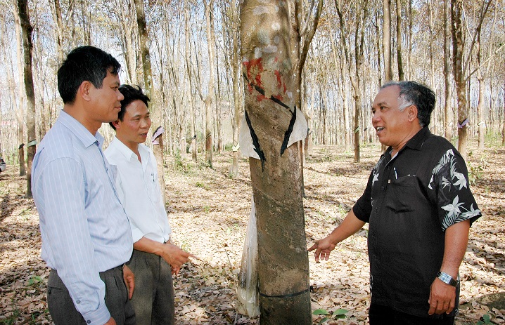 Ông A Xem( bên phải) hướng dẫn kỹ thuật khai thác cao su trên trang trại của gia đình